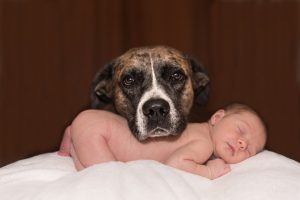 Image of a dog resting his hed on a sleeping baby's back