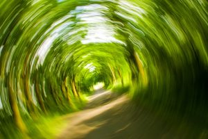Image of a distorted tunnel of trees