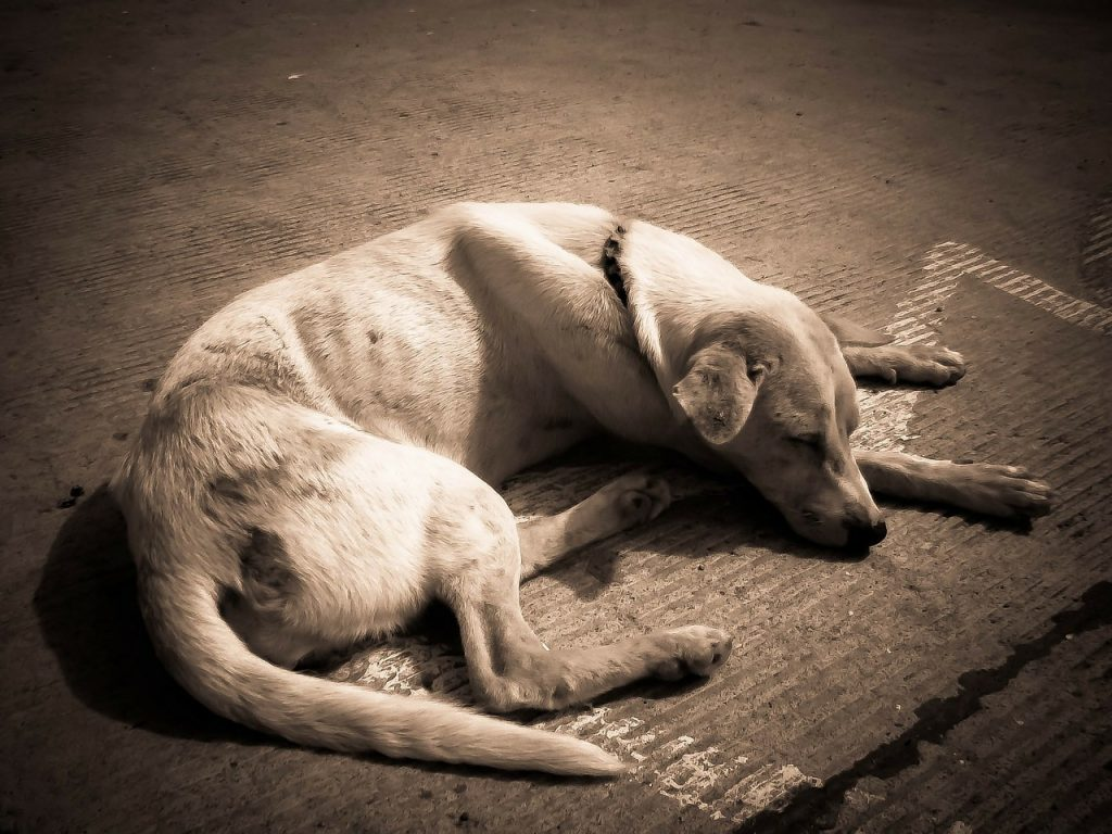 Image of a not-so-healthy looking dog sleeping