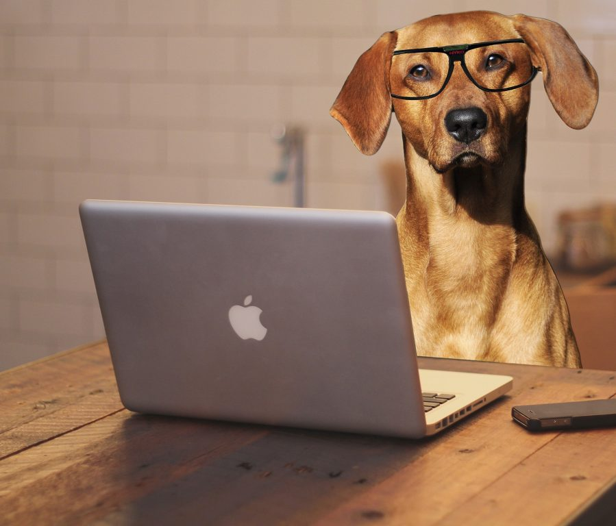 Dog with glasses in front of a computer