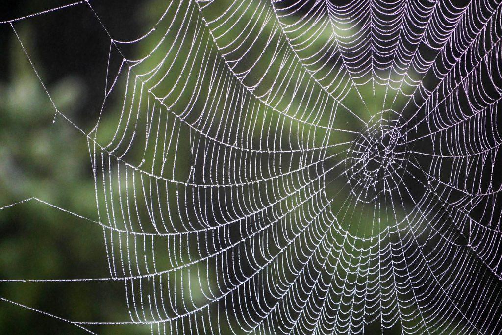 Spider Bites - Photo of a spider web