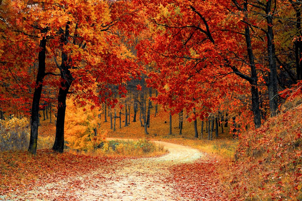 A photo of a forest trail through the forest in autumn