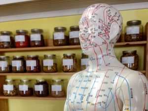 Plastic acupuncture model standing in front of shelves of Chinese herbs