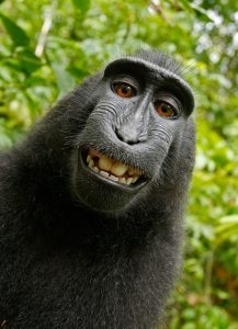 Image of a black chimp smiling