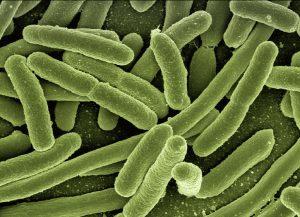 Image of microscopic view of e. coli bacteria