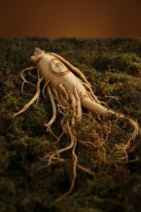 Image of a ginseng root on moss