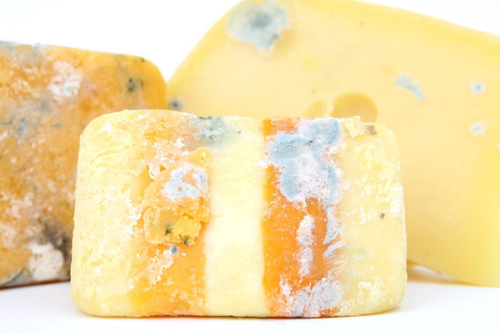 Image of moldy cheese