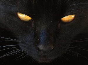 Image of a black cat with yellow eyes