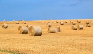Image of bales of hay in a large field below blue sky