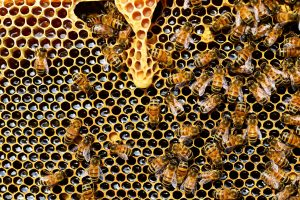 Image of a hive and bees