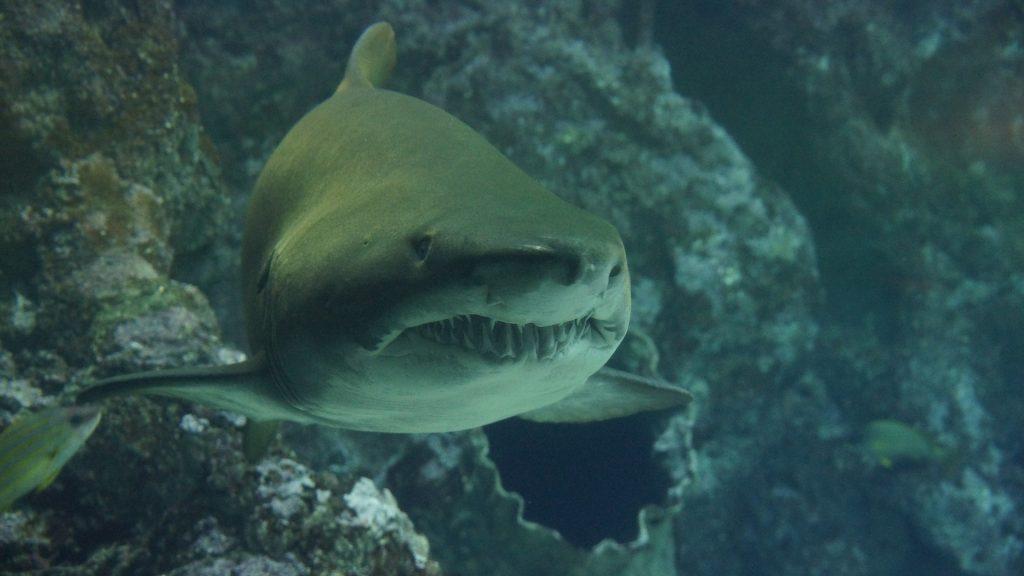 Shark swimming --gotta breathe/no time to sleep