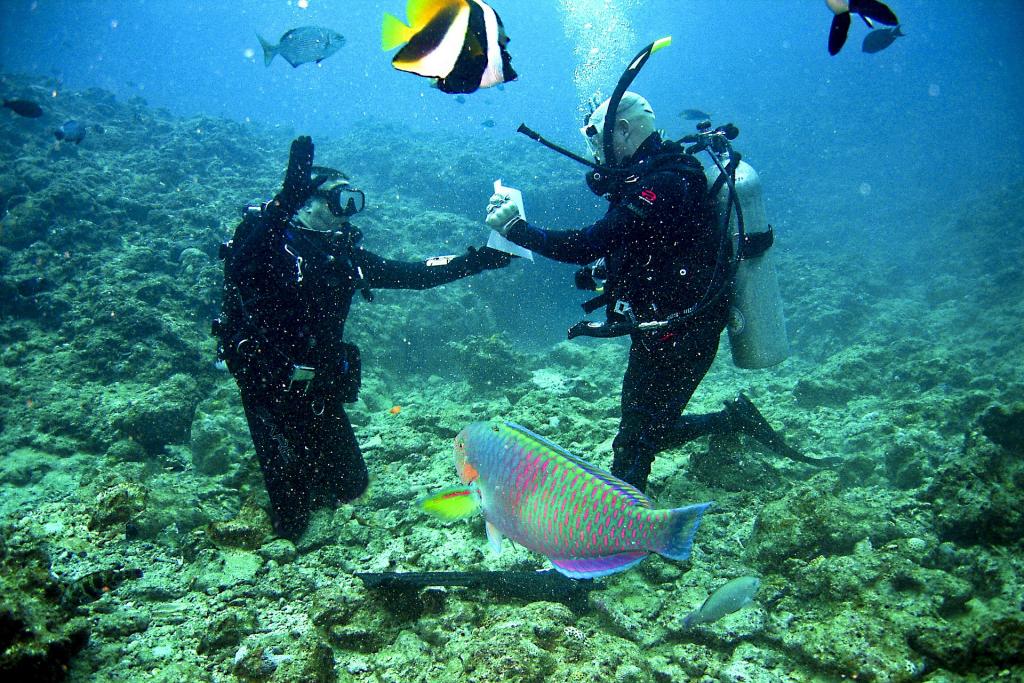 Deptherapy - 2 scuba divers underwater