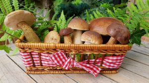 A basket of food mushrooms - Vitamin B2